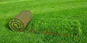 Electric lawn - a new invention of the Kuban scientists.